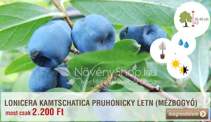 LONICERA KAMTSCHATICA PRUHONICKY LETN