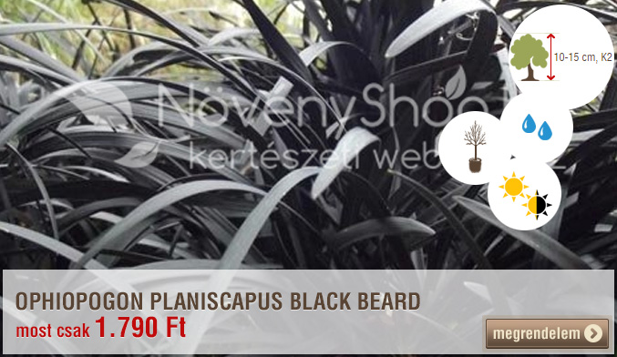 Ophiogon Black Beard