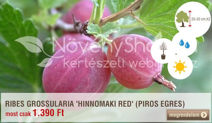 Ribes grossularia 'Hinnomaki Red'