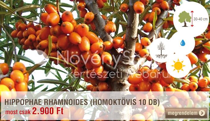 HIPPOPHAE RHAMNOIDES (HOMOKTÖVIS 10 DB)
