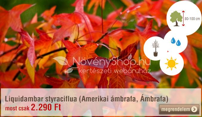 Liquidambar styraciflua (Amerikai ámbrafa, Ámbrafa) Ár: 2.290 Ft