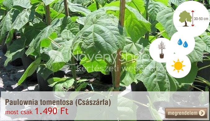 Paulownia tomentosa (Császárfa) 1.490 Ft