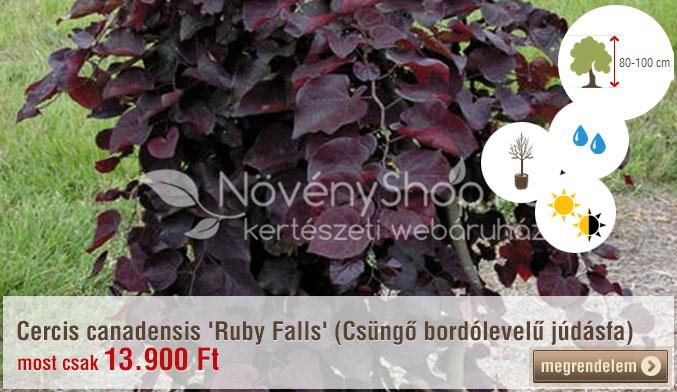 Cercis canadensis 'Ruby Falls' (Csüngő bordólevelű júdásfa) Ár: 13.900 Ft