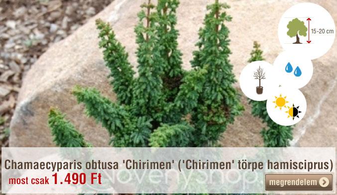 Chamaecyparis obtusa 'Chirimen' ('Chirimen' törpe hamisciprus) Ár: 1.490 Ft