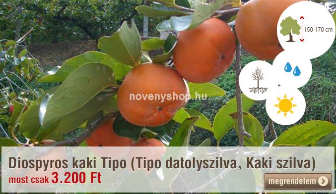 Diospyros kaki Tipo (Tipo datolyszilva, Kaki szilva) Akciós ár: 3.200 Ft (-9%)