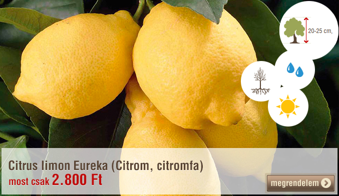 Citrus limon Eureka (Citrom, citromfa)