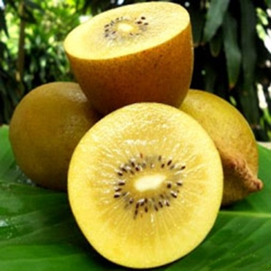 actinidia-golden-delight-female.jpg