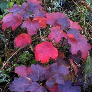fall_leaves1.jpg