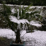 Northern-Ireland-1024px-Snow_on_Trachycar.jpg