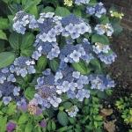 blue-deckle-589089-1.jpg