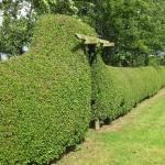 garden_privet_800x600.JPG