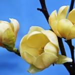 honey-tulip_2846-copy.jpg
