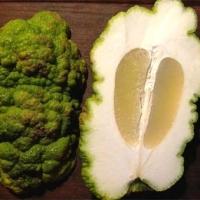 """Citrus limon x Citrus grandis """"Vozza Vozza"""""""