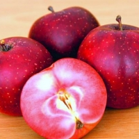 Alma Baya Marisa, Vörös húsú alma