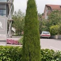 Totem európai ciprus