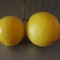 Édes citrom